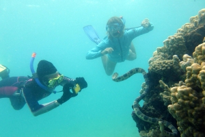 Meet the snorkeling grandmas who swim with deadly sea snakes