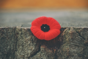 Phone scammers claiming to be Vancouver Poppy Fund to get credit card info, group says