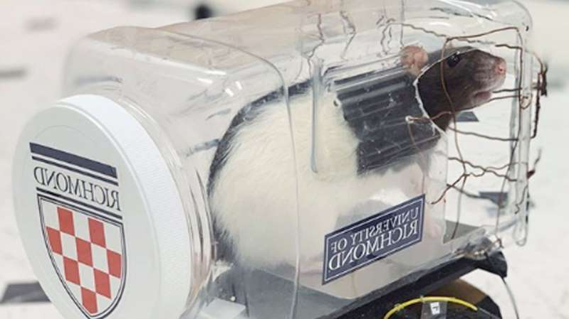 a close up of a car: Scientists taught rats to drive little cars. Pic: University of Richmond