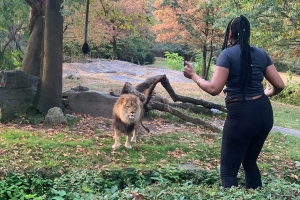 Woman wanted for climbing into Bronx Zoo lion exhibit: 'I am the lion now'