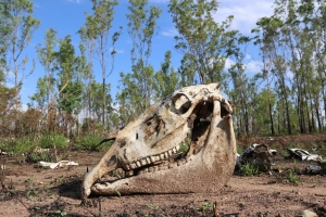 Dumped horse carcasses in Darwin's rural area spark contamination investigation