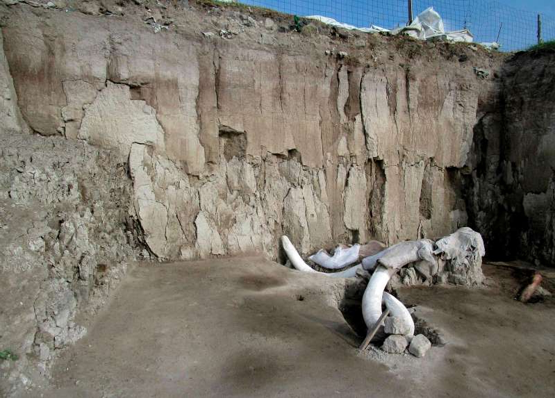 a lizard on a rock: This photo released on November 6, 2019 by Mexico's National Institute of Anthropology (INAH) shows mammoth bones in Tultepec, Mexico. The bones of at least 14 mammoths, who would have lived more than 14,000 years ago, were found in what is believed to be the first find of a mammoth trap set by humans.
