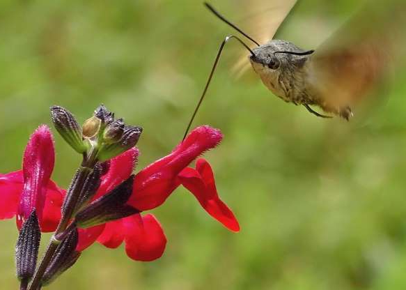 a hummingbird feeding on a flower: Thomas Easterbrook took first place for photographers age 10 and under for