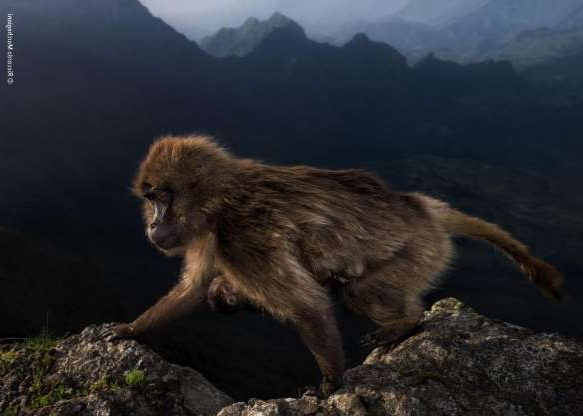 a monkey sitting on a rock: Riccardo Marchegiani won in the category for photographers aged 15-17 with
