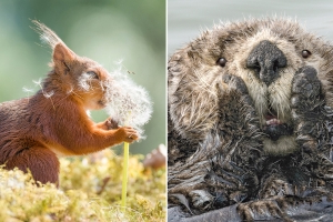 19 hysterical winners from this year's Comedy Wildlife Photography Awards