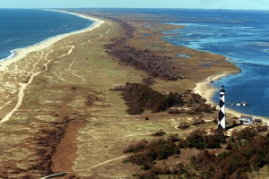 Cows swept out to sea by Hurricane Dorian are found months later – on the Outer Banks