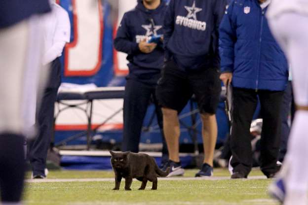 Slide 14 of 26: Who among us doesn't love the occasional animal on the field? A black cat invaded a