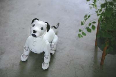 a white teddy bear sitting on top of a stuffed toy: Aibo owners can now program the robot dog to do new tricks.