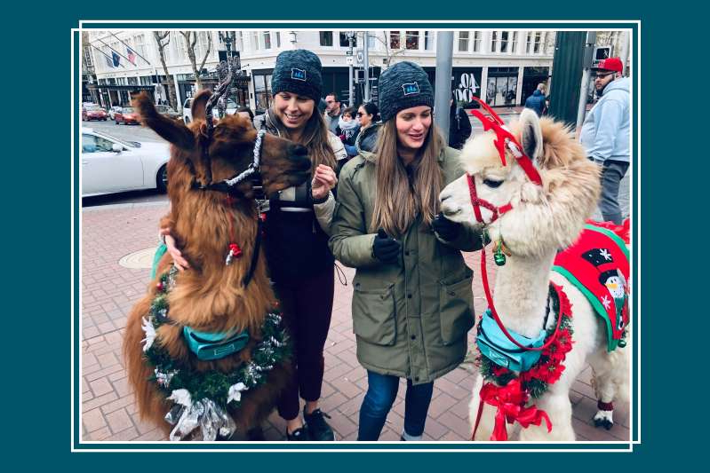 a dog wearing a costume: Woolly friends Napoleon, left, an alpaca, and Rojo, a llama, in festive gear. (Jamie Hangauer/Kimpton Hotels)