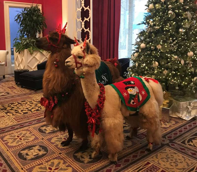 a group of stuffed animals sitting next to a christmas tree: Napoleon, front, and Rojo pose in the hotel lobby.  (Kimpton Hotels)