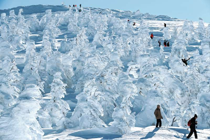 a group of people riding skis down a snow covered slope: Ice-covered trees, known as snow monsters, transform southern Tohoku's Zao ski resort into a Japanese winter wonderland.