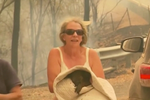 Woman races into wildfire zone to save the life of a burned koala