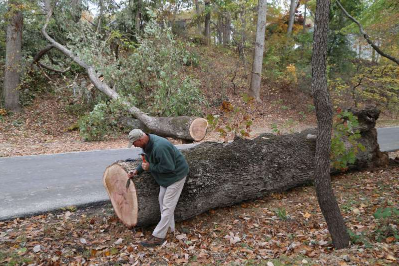 a man sitting in a tree: Dean Norton, director of horticulture at Mount Vernon, chisels away an area on the trunk of a 230-year-old tree that fell at the home of George Washington. (George Washington's Mount Vernon)