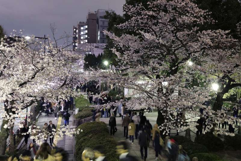 a group of people walking down a street next to a tree: People walk under illuminated cherry trees in bloom at night in Tokyo, Japan, on Friday, April 1, 2016.