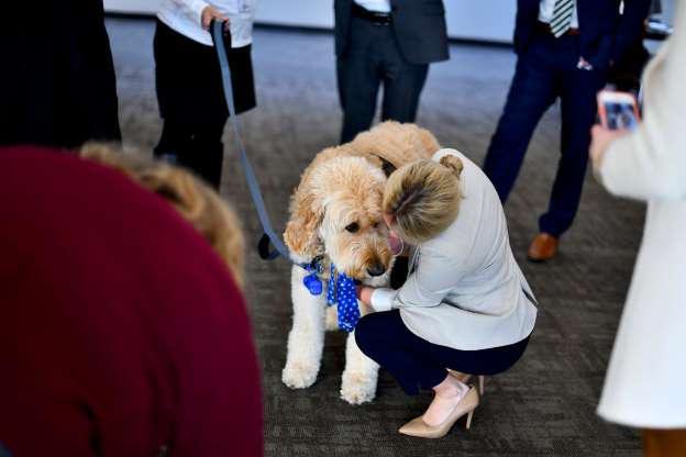Slide 51 of 74: Golden Doodle therapy dog, 'Blue,' greets Congressional staff during a