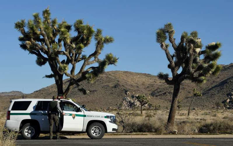 A U.S. Park Ranger gets back into his vehicle after opening a side road within Joshua Tree National Park on Thursday, Jan. 10, 2019 in Calif. Despite the partial federal shutdown Joshua Tree National Park remained open Thursday, January 10, 2019. The park has minimal staffing and campgrounds are now open. There is no park entry fee at the moment.