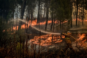 How to live with mega-fires? Portugal's feral forests may hold the secret