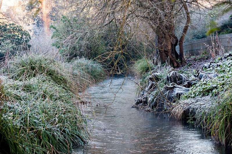 a waterfall surrounded by trees: Pic Shows: General Scenes as frost remains at the Botanic gardens