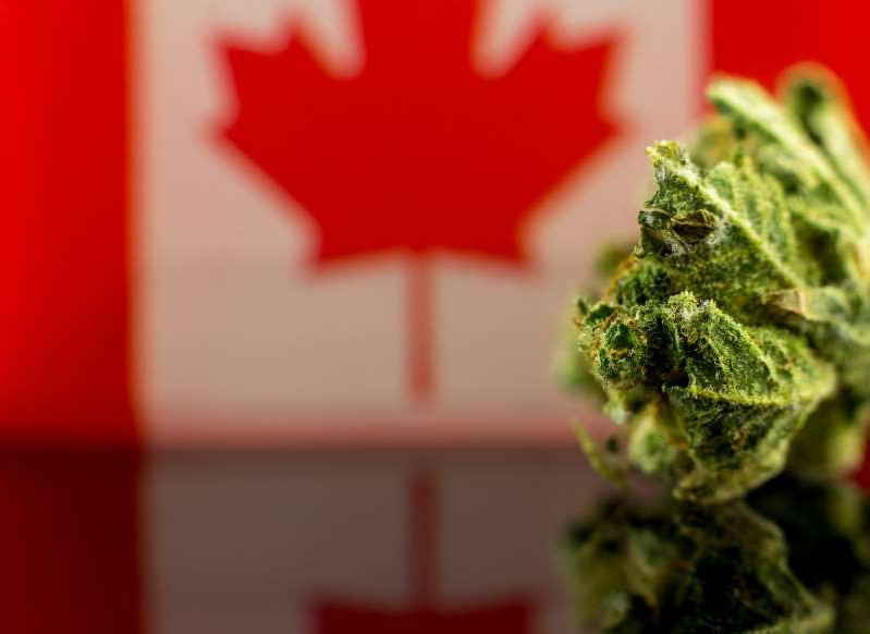 a close up of a piece of broccoli: Aphria Stock Falls on Q2 Revenue Miss, Guidance Chop