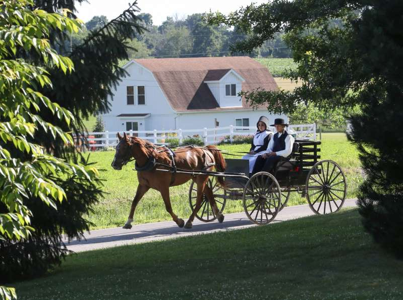 a person riding a horse drawn carriage: The Amish eschew most cars, but that doesn't mean they avoid technology entirely.