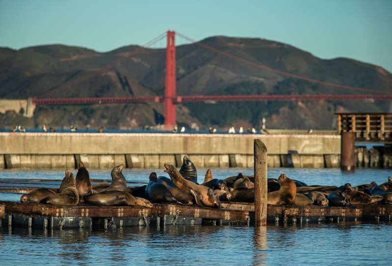 a flock of seagulls standing next to a body of water: All-male California sea lions sun bath on the docks at Pier 39 on Jan. 6, 2020 in San Francisco, Calif. Each winter since 1990, an ever-growing band of the sea lions has converged on the docks there.