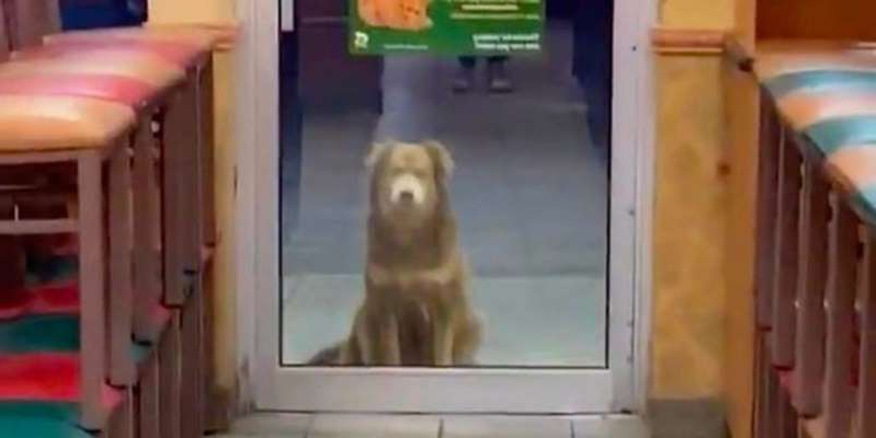 This stray dog has been going to Subway every day for a year begging for food