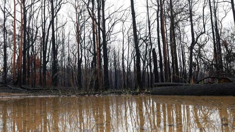 a tree next to a body of water: Heavy rains have doused many of the country's bushfires