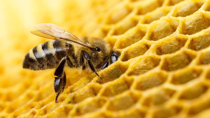 Too much sugar can be a bad thing for bees