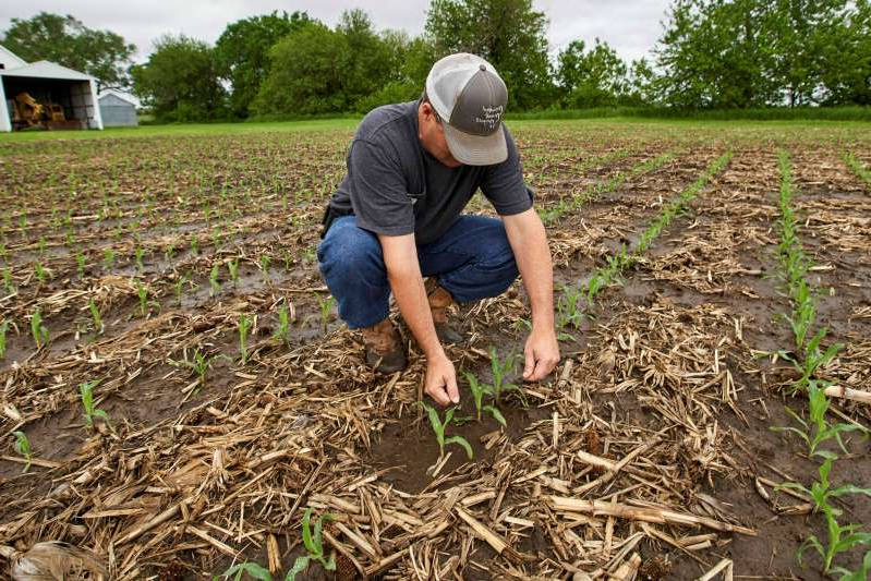 a man that is standing in the grass: Jeff Jorgenson examines young corn plants in May on a partially flooded field he farms near Shenandoah, Iowa. A USDA scientist was working on a tool to help farmers mitigate the impact of flooding and other effects from climate change when the Trump administration moved his agency to Kansas, prompting him to quit.