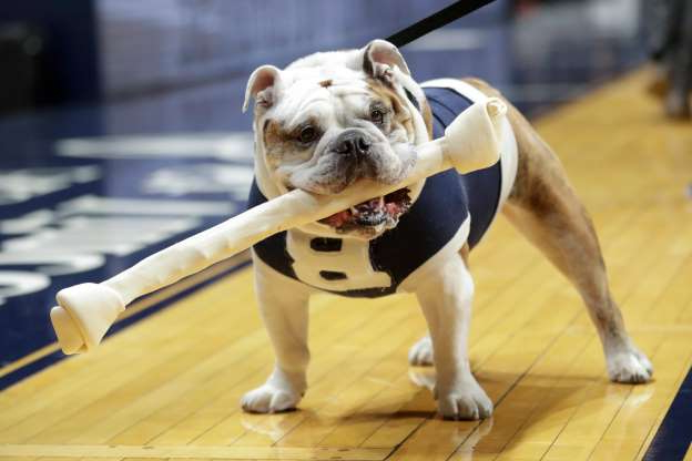 Slide 1 of 61: Feb. 12: Blue III, Butler's mascot, carries a bone to the floor during introductions before the game between Butler and Xavier in Indianapolis.