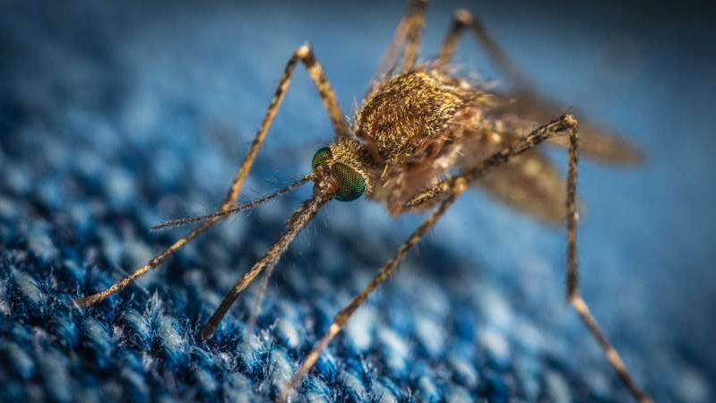 a close up of an animal: Gold Coast City Councillor Hermann Vorster says the number of mosquitos has reached