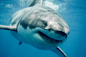 Surfer punches and swears at great white shark to survive attack