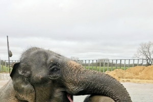 Elizabeth the baby elephant makes a splash at ZSL Whipsnade Zoo