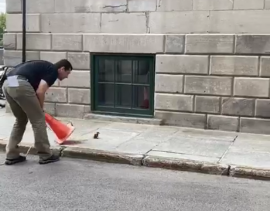 a person standing on a sidewalk: Museum employee rescue duckling trapped inside a manhole.