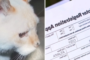 Cat gets voter registration application in the mail – after dying 12 years ago