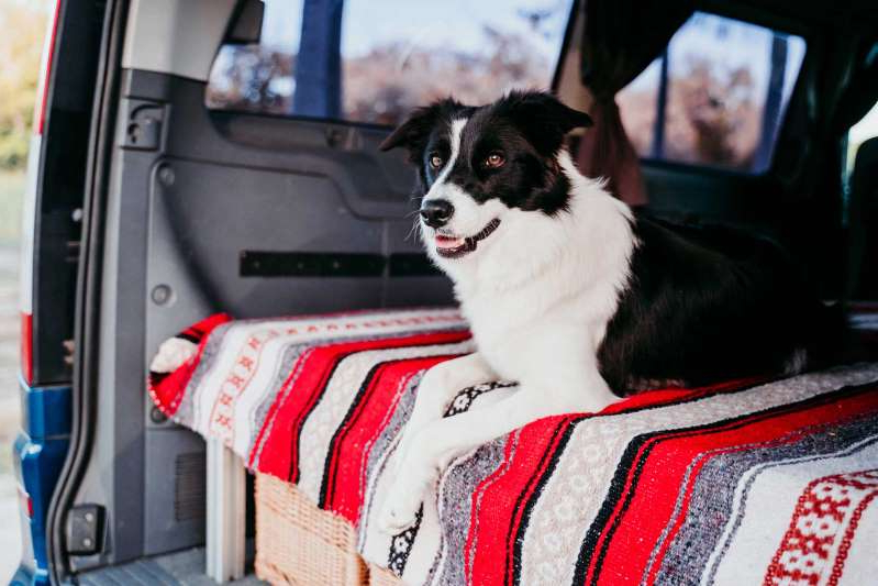 a dog sitting on top of a car: Follow these tips and tricks and your pup is guaranteed to be a happy camper.