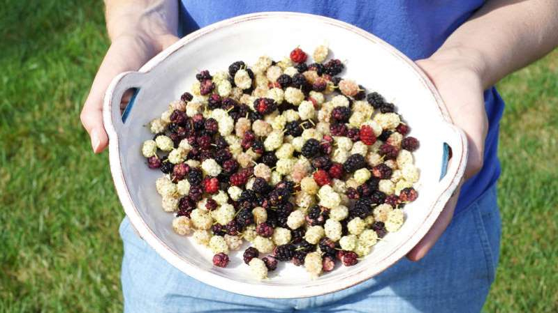 a person holding a bowl of fruit on a plate: A backyard harvest