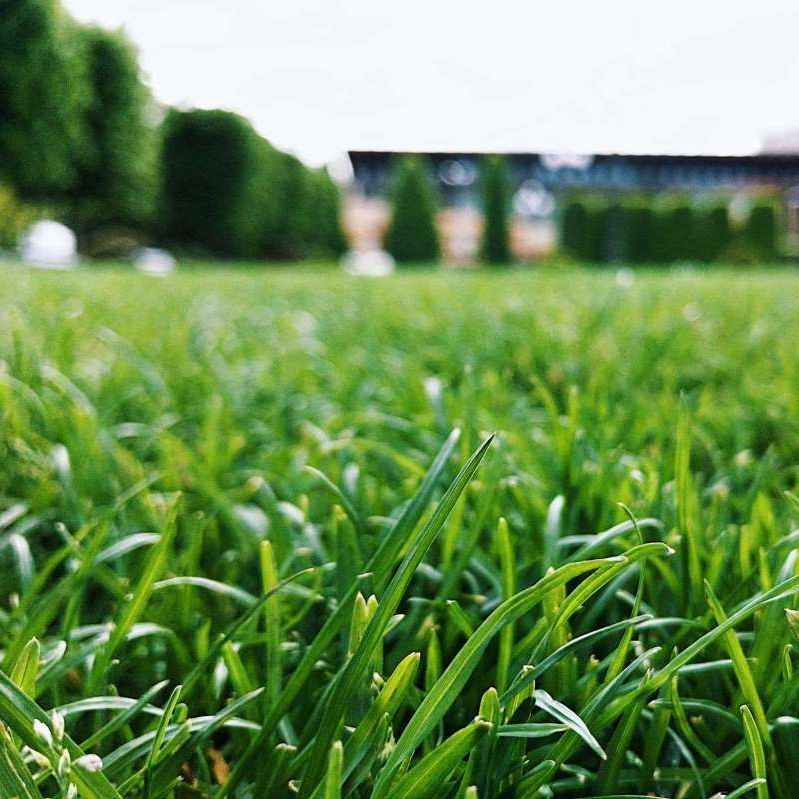 a close up of a lush green field