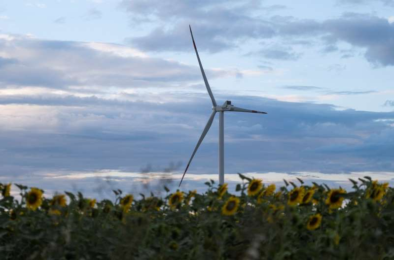 A wind turbine is seen through sunflowers during sunset outside Ulyanovsk