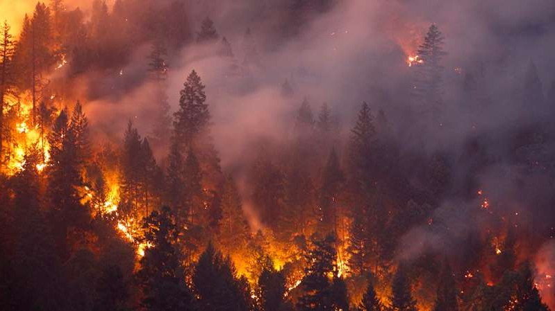 a lot of smoke around it: We need a Civilian Conservation Corps for forest management