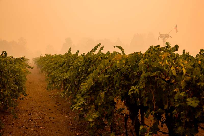 a group of people in a forest: Smoke from the Glass Fire hangs heavy over a vineyard outside of Calistoga in Napa Valley, California on September 30, 2020.