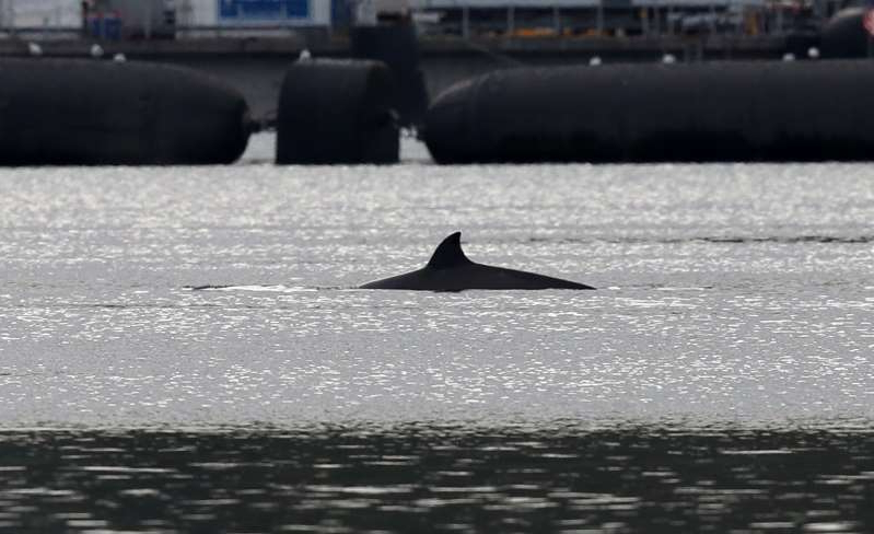 a large body of water: Three whales remain in Gare Loch (Andrew Milligan/PA)