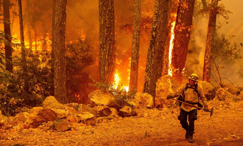 a man standing next to a forest: A firefighter walks away from flames as they quickly move through trees during the Glass Fire in Calistoga, California on October 1.