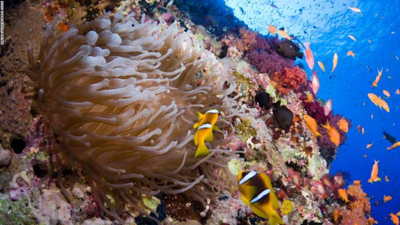 underwater view of a coral: The attack took place in the Ras Mohammed marine reserve in Egypt's Red Sea