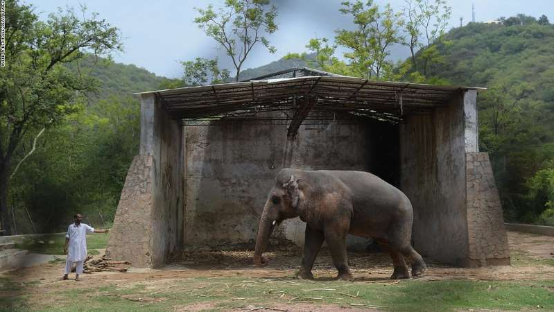 a large elephant standing in front of a building: Kaavan at the Marghazar Zoo in Islamabad on June 30, 2016.