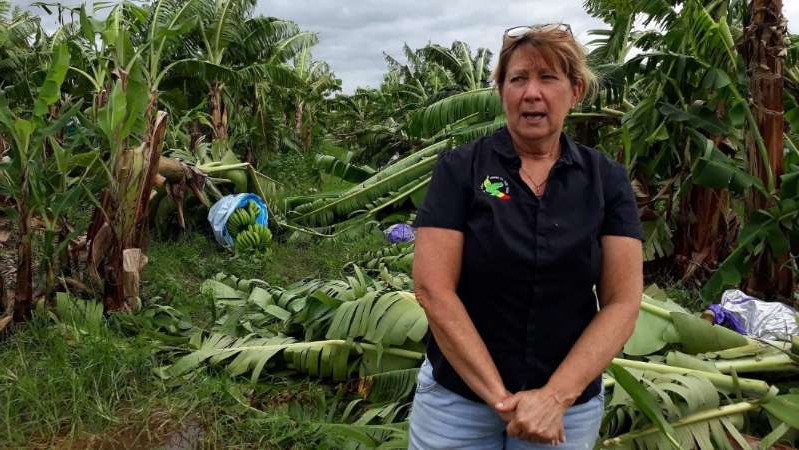 a man sitting in a garden: Banana farmers in north Queensland have been devastated by Tropical Cyclone Niran. (ABC News: Holly Richardson)