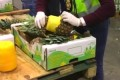 Portuguese, Spanish police bust huge 'pineapple' cocaine ring