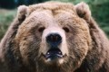 What a bear market means for retirement savings