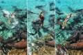 'I could feel his teeth sinking into my arm': Moment Instagram model, 19, is attacked while posing with sharks in the Bahamas