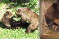 Abandoned and Abused Bear Falls in Love After His Rescue